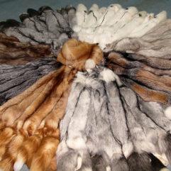 Шкурки лисицы выделанные